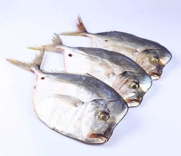Вомер-рыба-Описание-особенности-виды-и-среда-обитания-вомера-8
