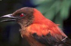 Ядовитые птицы. Описание, особенности и названия ядовитых птиц