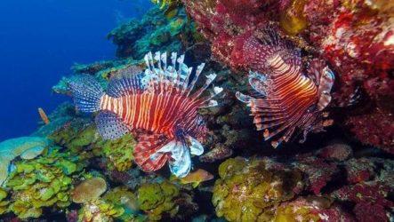 Ядовитые рыбы. Описания, особенности и названия ядовитых рыб