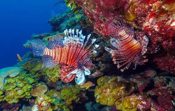 Ядовитые-рыбы-Описания-особенности-и-названия-ядовитых-рыб-1