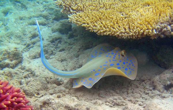 Ядовитые-рыбы-Описания-особенности-и-названия-ядовитых-рыб-5
