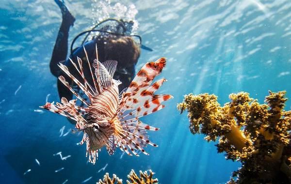 Ядовитые-рыбы-Описания-особенности-и-названия-ядовитых-рыб-9