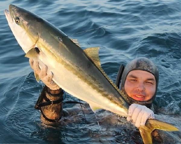 Лакедра-рыба-Описание-особенности-образ-жизни-и-среда-обитания-лакедры-1