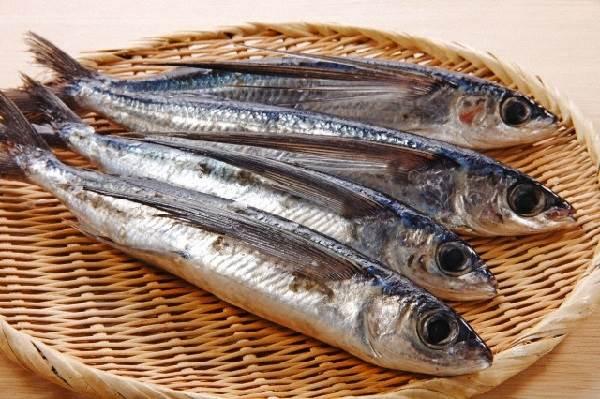 Летучая-рыба-Описание-особенности-образ-жизни-и-среда-обитания-летучей-рыбы-4