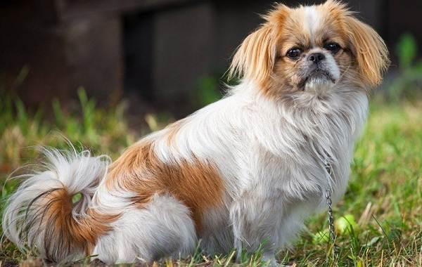 Сколько-живут-собаки-16