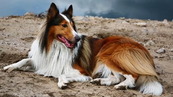 Сколько-живут-собаки-2