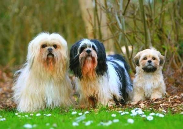 Сколько-живут-собаки-3