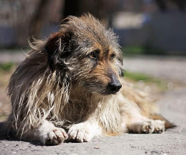 Сколько-живут-собаки-4