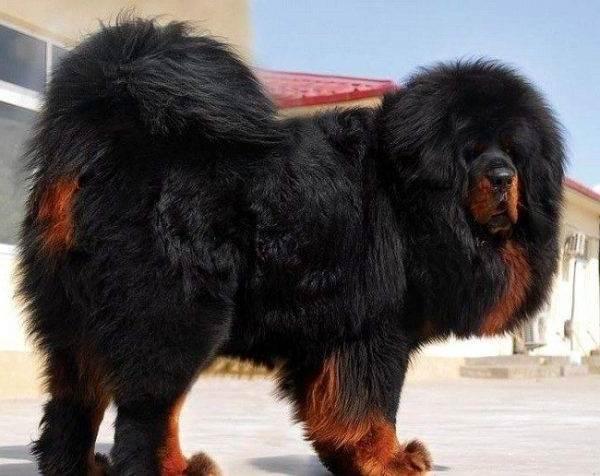 Сколько-живут-собаки-5