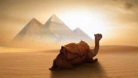 Животные Египта. Описания, названия и особенности животных Египта