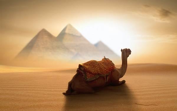 Животные-Египта-Описания-названия-и-особенности-животных-Египта-1