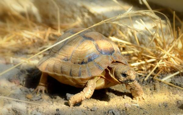 Животные-Египта-Описания-названия-и-особенности-животных-Египта-11