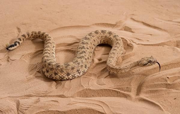 Животные-Египта-Описания-названия-и-особенности-животных-Египта-19