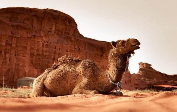 Животные-Египта-Описания-названия-и-особенности-животных-Египта-32