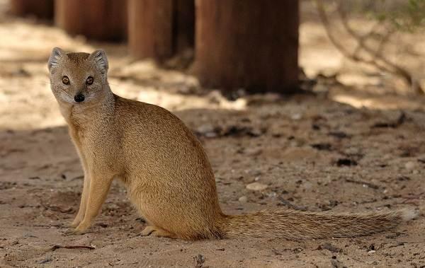 Животные-Египта-Описания-названия-и-особенности-животных-Египта-34