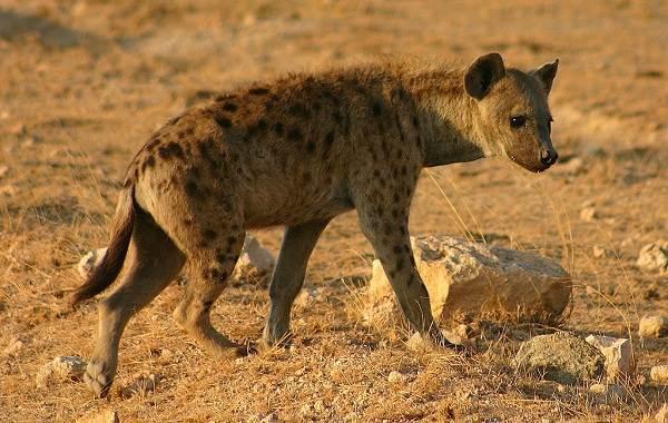 Животные-Египта-Описания-названия-и-особенности-животных-Египта-35