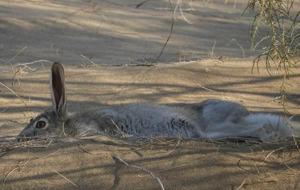 Животные-Египта-Описания-названия-и-особенности-животных-Египта-37