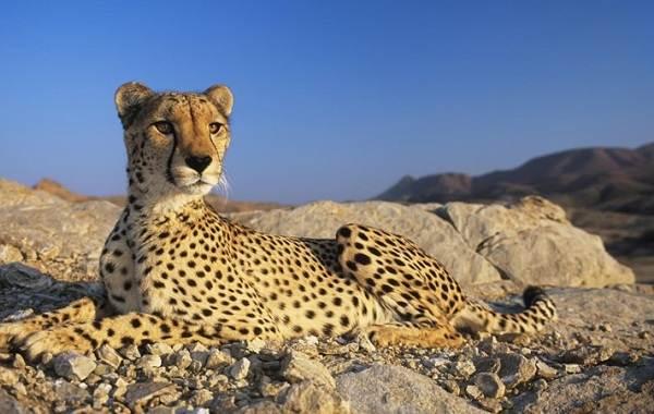 Животные-Египта-Описания-названия-и-особенности-животных-Египта-41