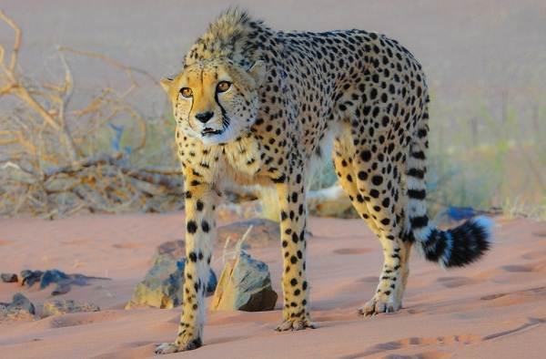 Животные-Египта-Описания-названия-и-особенности-животных-Египта-42