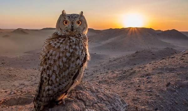 Животные-Египта-Описания-названия-и-особенности-животных-Египта-46