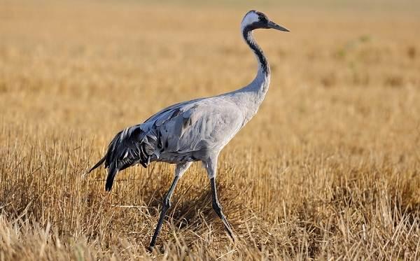 Животные-Египта-Описания-названия-и-особенности-животных-Египта-51