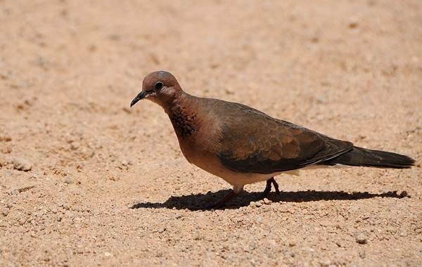 Животные-Египта-Описания-названия-и-особенности-животных-Египта-56