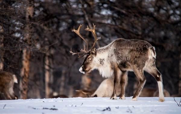Животные-Пермского-края-Описания-названия-и-виды-животных-Пермского-края-22
