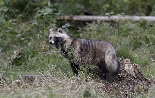 Животные-Пермского-края-Описания-названия-и-виды-животных-Пермского-края-32