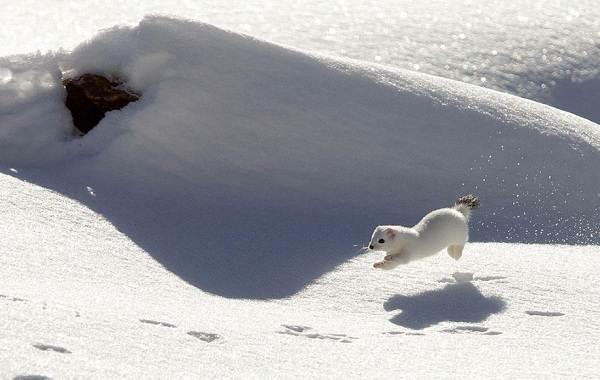 Животные-Пермского-края-Описания-названия-и-виды-животных-Пермского-края-33