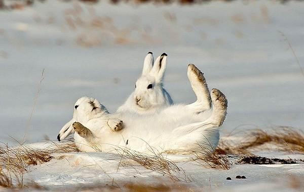 Животные-Пермского-края-Описания-названия-и-виды-животных-Пермского-края-5