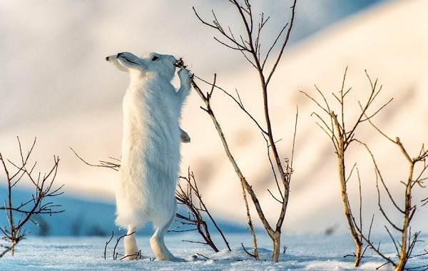Животные-Пермского-края-Описания-названия-и-виды-животных-Пермского-края-6