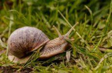 Брюхоногие моллюски. Описание, особенности, виды и значение брюхоногих моллюсков