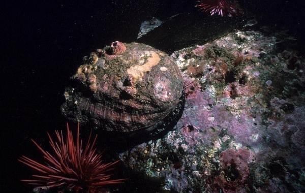 Брюхоногие-моллюски-Описание-особенности-виды-и-значение-брюхоногих-моллюсков-6