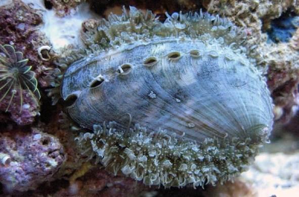 Брюхоногие-моллюски-Описание-особенности-виды-и-значение-брюхоногих-моллюсков-7