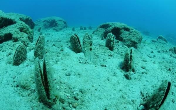 Двустворчатые-моллюски-Описание-особенности-строение-и-виды-двустворчатых-моллюсков-10