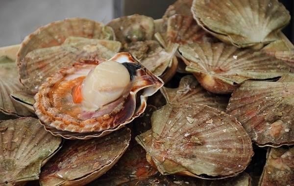 Двустворчатые-моллюски-Описание-особенности-строение-и-виды-двустворчатых-моллюсков-12