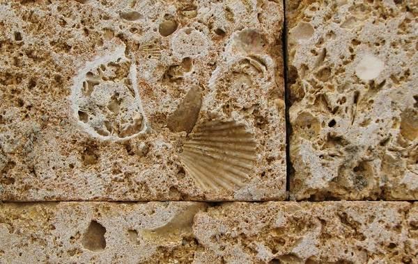 Двустворчатые-моллюски-Описание-особенности-строение-и-виды-двустворчатых-моллюсков-25