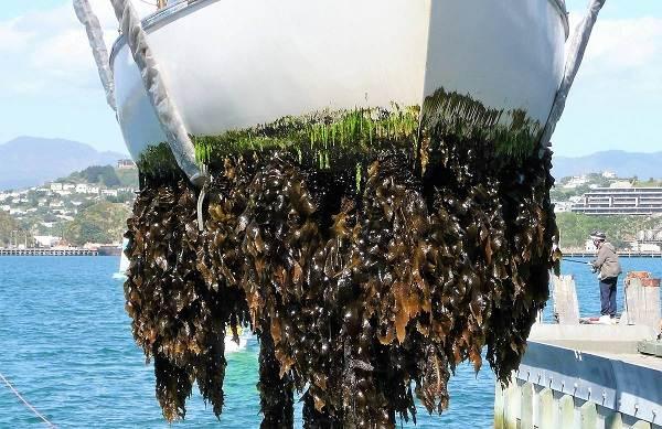 Двустворчатые-моллюски-Описание-особенности-строение-и-виды-двустворчатых-моллюсков-26