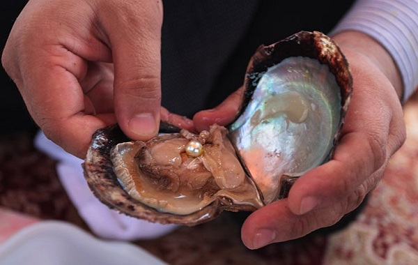 Двустворчатые-моллюски-Описание-особенности-строение-и-виды-двустворчатых-моллюсков-28