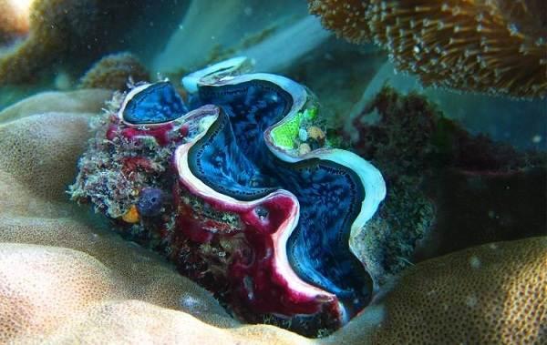 Двустворчатые-моллюски-Описание-особенности-строение-и-виды-двустворчатых-моллюсков-7