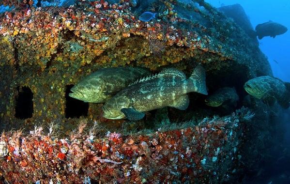 Коралловые-полипы-Описание-особенности-виды-и-значение-коралловых-полипов-27