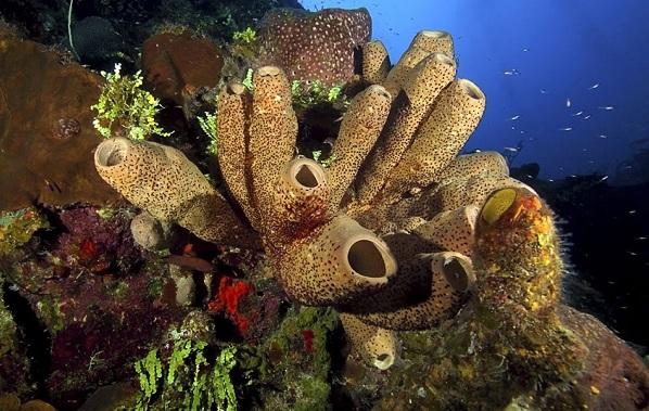 Коралловые-полипы-Описание-особенности-виды-и-значение-коралловых-полипов-28