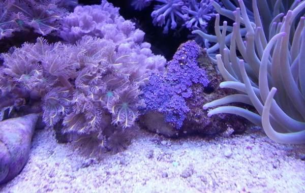 Коралловые-полипы-Описание-особенности-виды-и-значение-коралловых-полипов-3