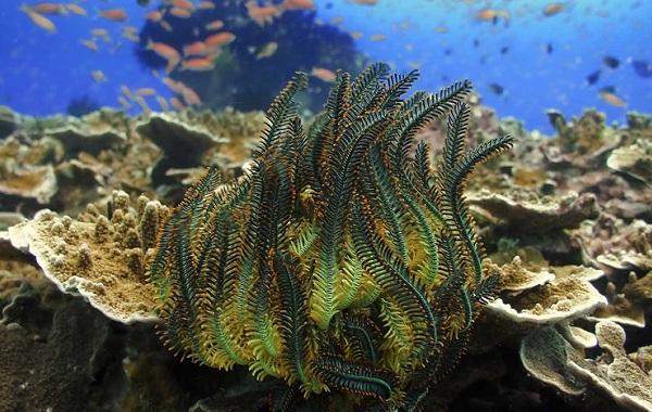 Коралловые-полипы-Описание-особенности-виды-и-значение-коралловых-полипов-31