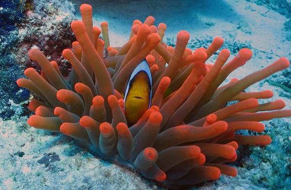 Коралловые-полипы-Описание-особенности-виды-и-значение-коралловых-полипов-33