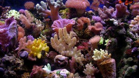 Коралловые полипы. Описание, особенности, виды и значение коралловых полипов