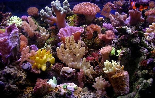 Коралловые-полипы-Описание-особенности-виды-и-значение-коралловых-полипов-5