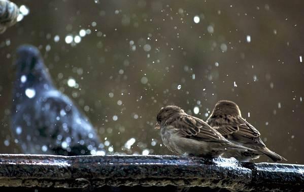 Осёдлые-птицы-Описания-названия-и-виды-осёдлых-птиц-1
