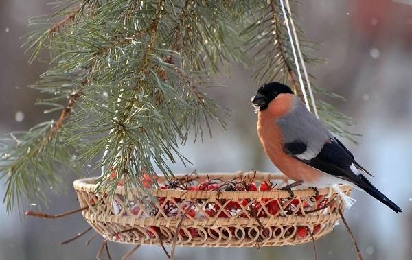 Осёдлые-птицы-Описания-названия-и-виды-осёдлых-птиц-11