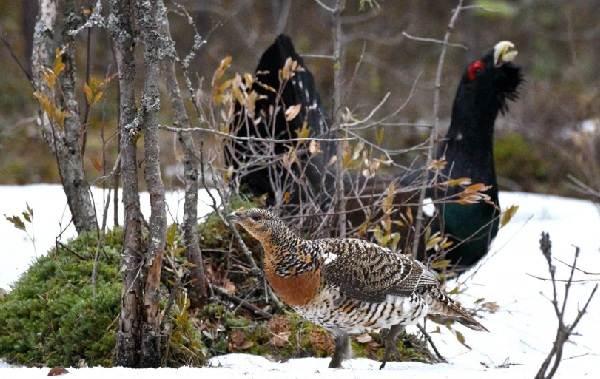 Осёдлые-птицы-Описания-названия-и-виды-осёдлых-птиц-12